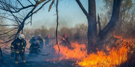 Pożar lasu pod Warszawą. Spłonęło kilkaset metrów kwadratowych