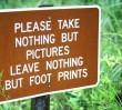 NIE dla wycinki drzew!