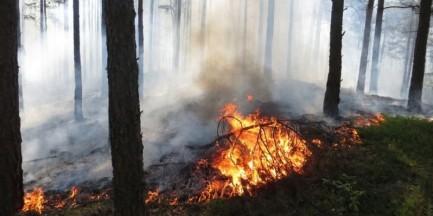 Pożar lasu w Kampinoskim Parku Narodowym to jednak podpalenie?