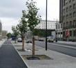 115 nowych drzew na Świętokrzyskiej (ZDJĘCIA)