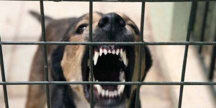 """Odebrali agresywne psy właścicielowi. """"Były przypadki pogryzień"""""""