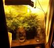 Duże ilości amfetaminy i marihuany na Grochowie