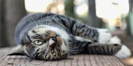 Ile kotów jest w Warszawie?