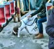 Gdzie w Warszawie znajdziemy wybieg dla psa?