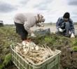 """Dziś rolnicy będą rozdawać """"nielegalną żywność"""""""