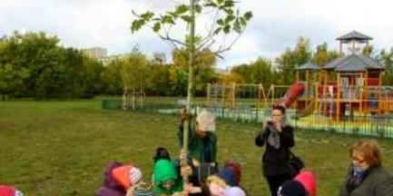 Zasadzą drzewa na XX-lecie Bemowa