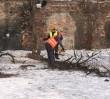 """Mieszkańcy Pragi walczą z wycinką drzew. """"Ustawa o ochronie przyrody to obchodzenie prawa!"""""""