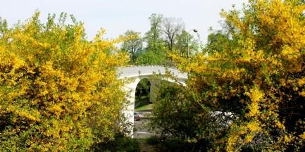 Fotostory: zielony Jazdów