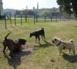 Darmowe czipowanie psów i kotów jeszcze przez miesiąc