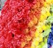 """Kończy się montaż kwiatów na """"Tęczy"""" [zdjęcia]"""