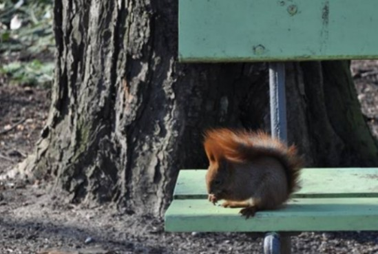 Wiewiórki można nakarmić niesolonymi nasionami i orzechami Fot. ZOM