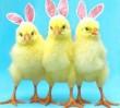 Zdrowych, pełnych spokoju i radości Świąt Wielkanocnych