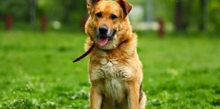 """1292 psy i 573 koty znalazły nowy dom. Coraz mniej bezdomnych zwierząt """"na Paluchu"""""""