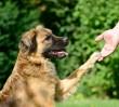 Uwaga! Ktoś celowo rozrzuca trutkę, by zabić psy!