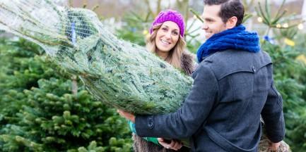 Co zrobić z choinką po świętach? Nie musisz wyrzucać, można ją posadzić w lesie