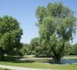 Przyjdź do parku Szymańskiego