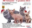 Już w ten weekend Wystawa Kotów Rasowych