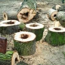 Prezydent oskarża PiS o wycinkę drzew w Warszawie. A jak było za jej rządów? Sprawdziliśmy