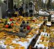 Hieny cmentarne grasują po świętach