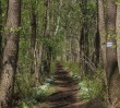 Wiosenna wycieczka piesza - Puszcza Kampinoska