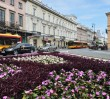 Centrum Warszawy w kwiatach! [ZDJĘCIA]