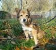 Zwierzęta zaginione w Sylwestra wciąż czekają w schronisku na właścicieli