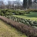 Róże zabezpieczone stroiszem w parku Ujazdowskim Fot. ZOM