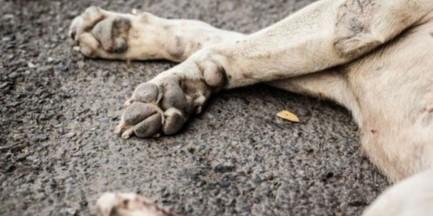 Podrzuciła psom kiełbasę z gwoździami i szpilkami. Usłyszała zarzuty