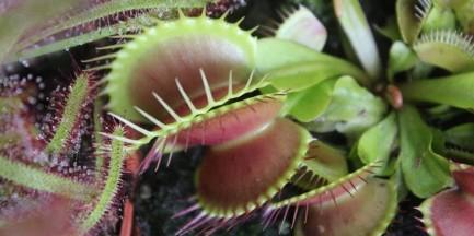 Rośliny owadożerne na wyciągnięcie dłoni