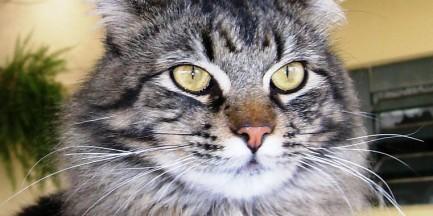 Miasto dofinansowuje sterylizację psów i kotów