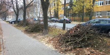 Nieznani sprawcy poobcinali korony drzewom przy Księcia Janusza