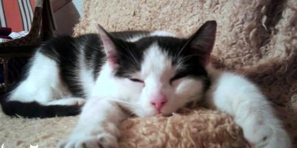 """""""Warszawę zamieszkuje obecnie kilkadziesiąt tysięcy kotów wolno żyjących"""" [ROZMOWA]"""