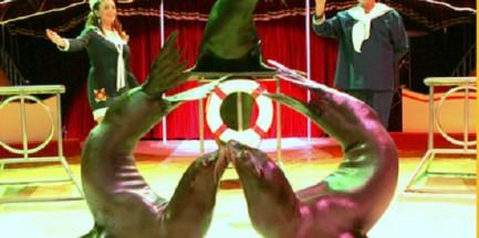 Na III Międzynarodowy Festiwal Talentów zjadą się artyści cyrkowi z całego świata!